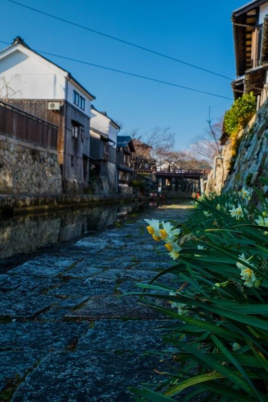 八幡堀に咲く水仙_e0363038_11075414.jpg