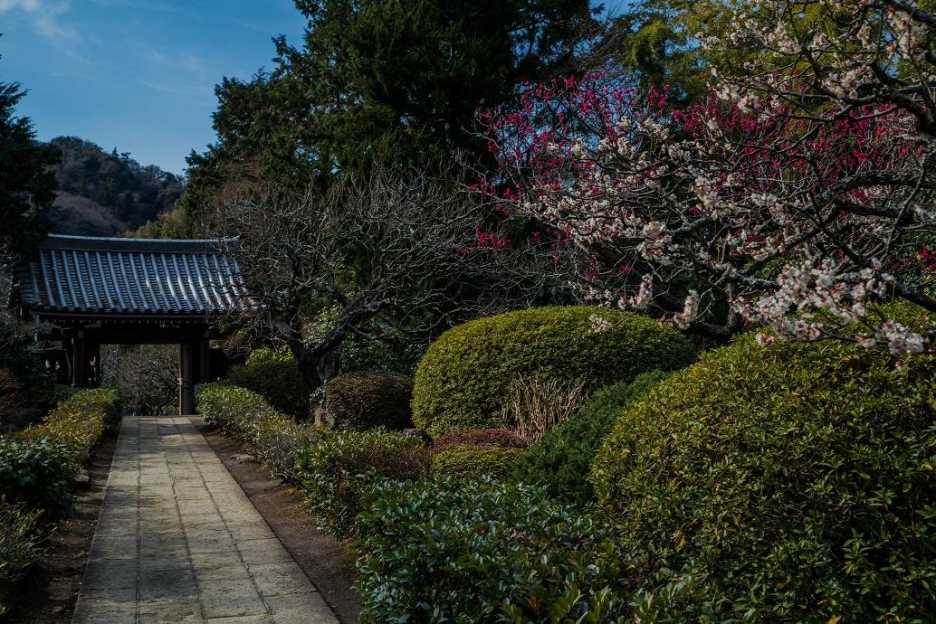 鎌倉~金沢街道・浄妙寺_e0363038_11132407.jpg