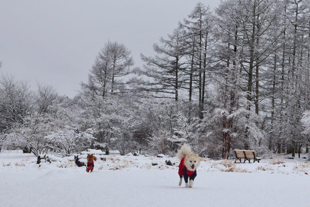 2019年冬・小淵沢〜清里(2) _a0119263_18120689.jpg