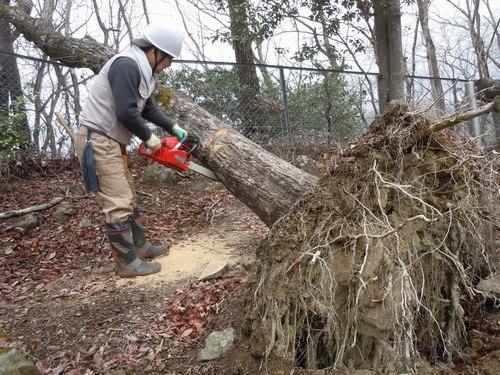 防災という観点からも森林ボランティアを考えてみたい_b0102572_1423683.jpg