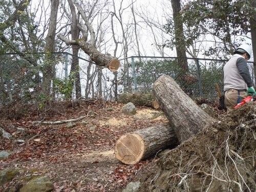 防災という観点からも森林ボランティアを考えてみたい_b0102572_1424618.jpg