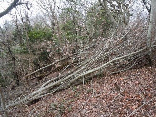 防災という観点からも森林ボランティアを考えてみたい_b0102572_142567.jpg