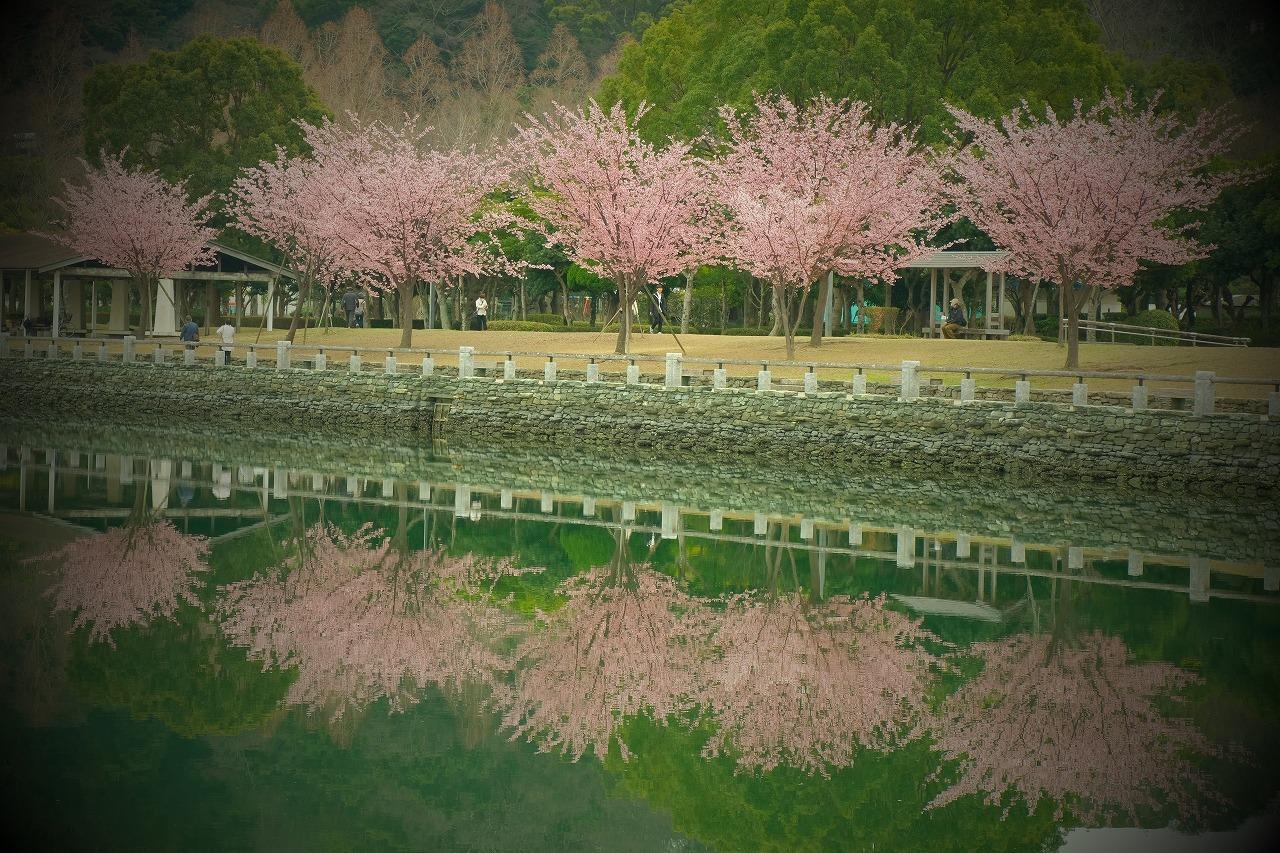 蜂須賀桜_a0015678_08015274.jpg
