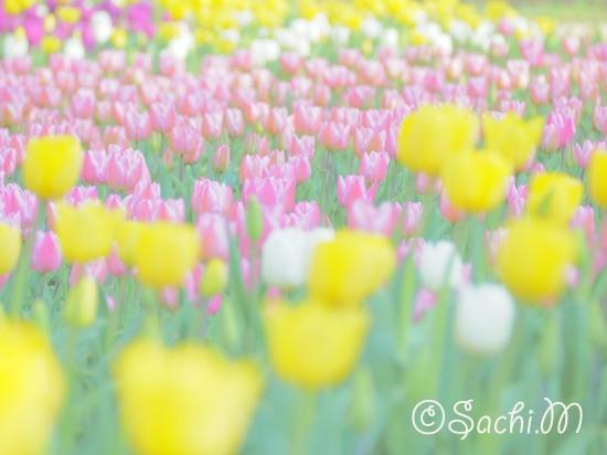 さち色フォト講座 ー春を写そうー募集します_c0073387_05402491.jpg
