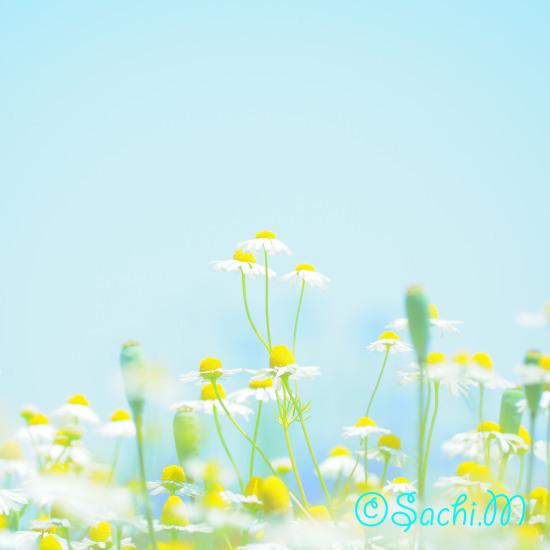 さち色フォト講座 ー春を写そうー募集します_c0073387_05411838.jpg