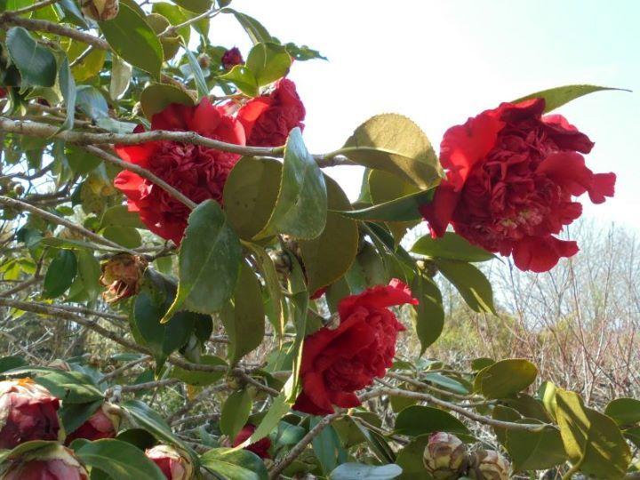 春の予感🌸_a0208899_11412890.jpg