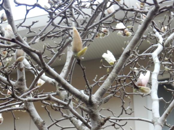 '19,3,8(金)春の花探しと春巻き!_f0060461_10145999.jpg