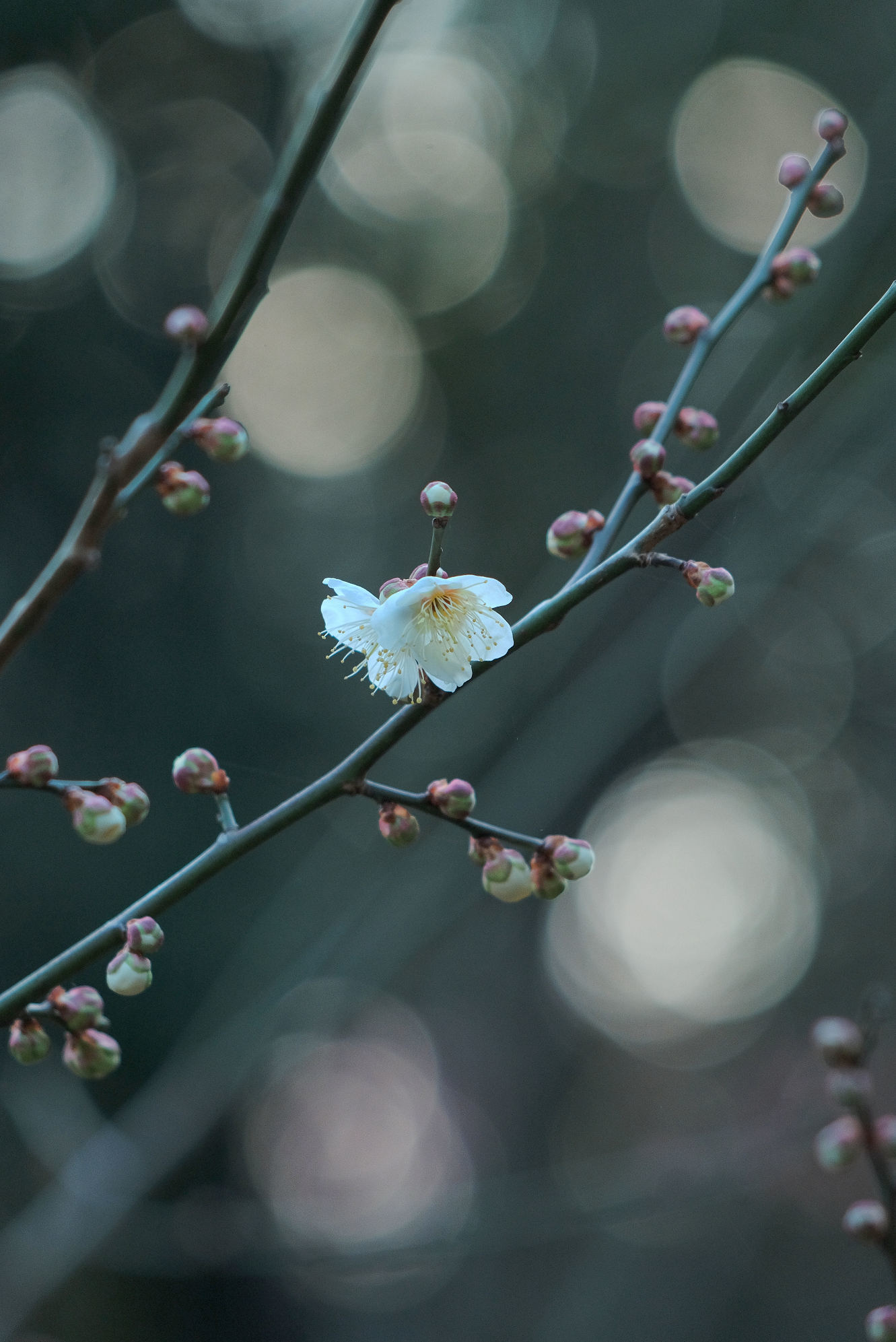 山田池公園_f0021869_11523428.jpg