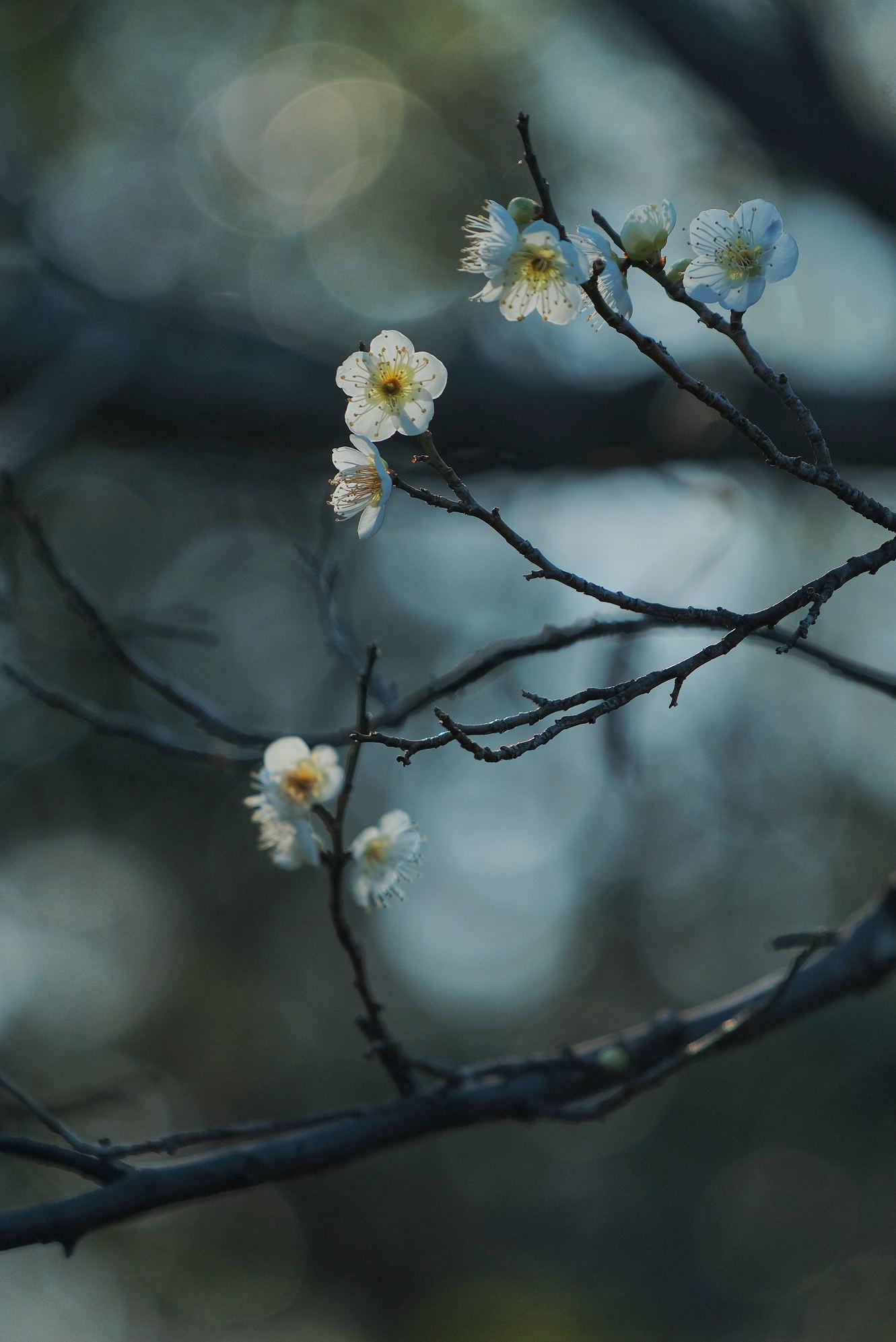 山田池公園_f0021869_11523483.jpg