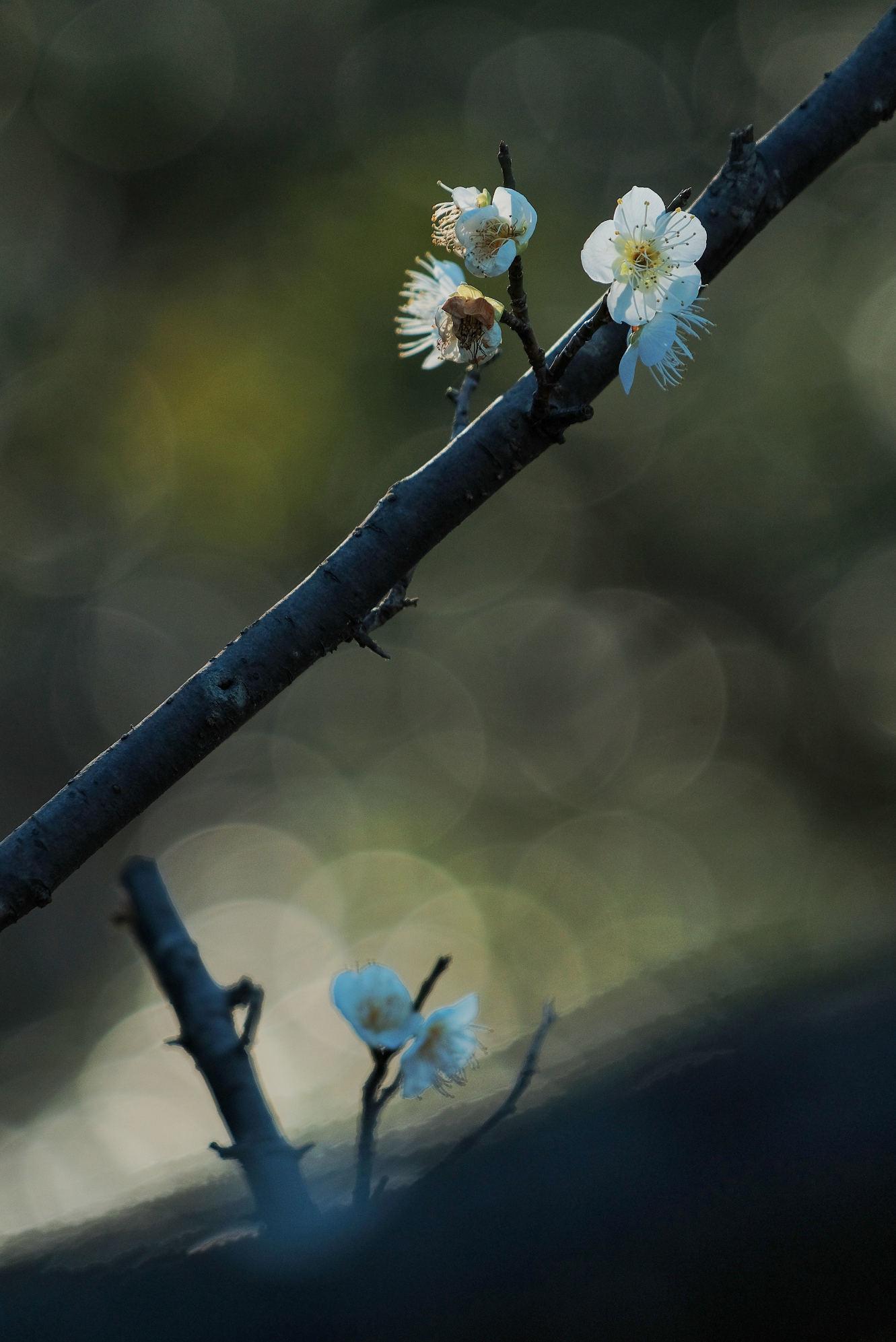 山田池公園_f0021869_11523490.jpg