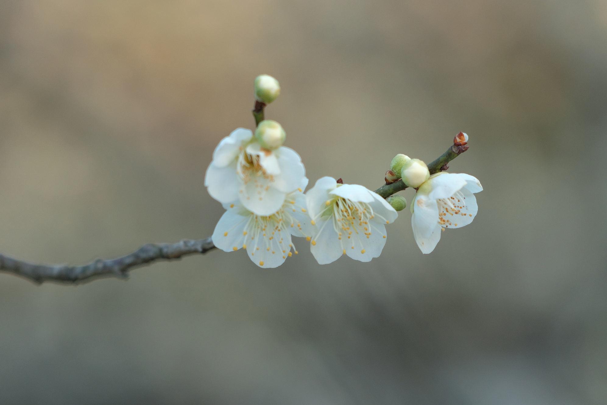 山田池公園_f0021869_11544029.jpg