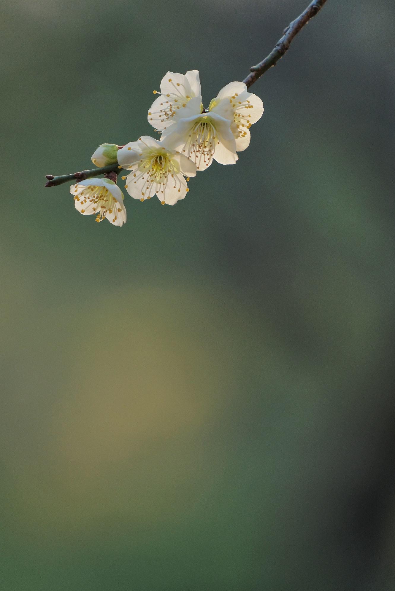 山田池公園_f0021869_11544119.jpg