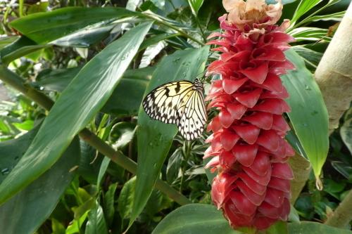 Butterfly Gardens_b0117700_08390360.jpg