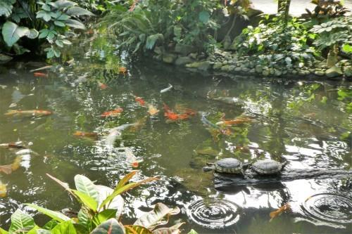 Butterfly Gardens_b0117700_09155671.jpg