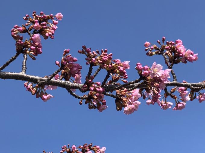 春の便り…🌸🌸🌸_c0162404_09461258.jpg