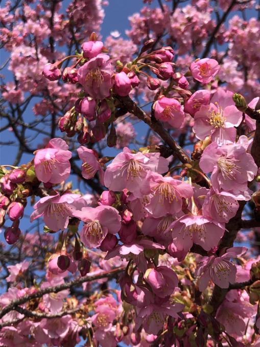 春の便り…🌸🌸🌸_c0162404_09462808.jpg