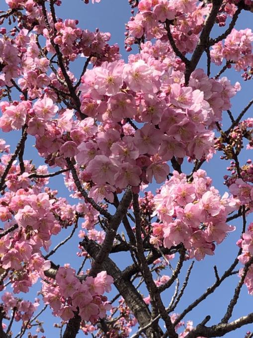 春の便り…🌸🌸🌸_c0162404_09463816.jpg