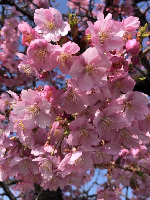 春の便り…🌸🌸🌸_c0162404_09465813.jpg