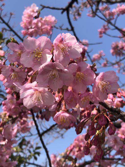 春の便り…🌸🌸🌸_c0162404_09470920.jpg