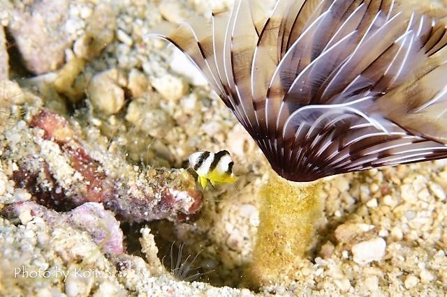 幼魚の季節_c0211615_17325137.jpg