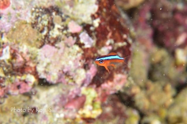 幼魚の季節_c0211615_17325145.jpg