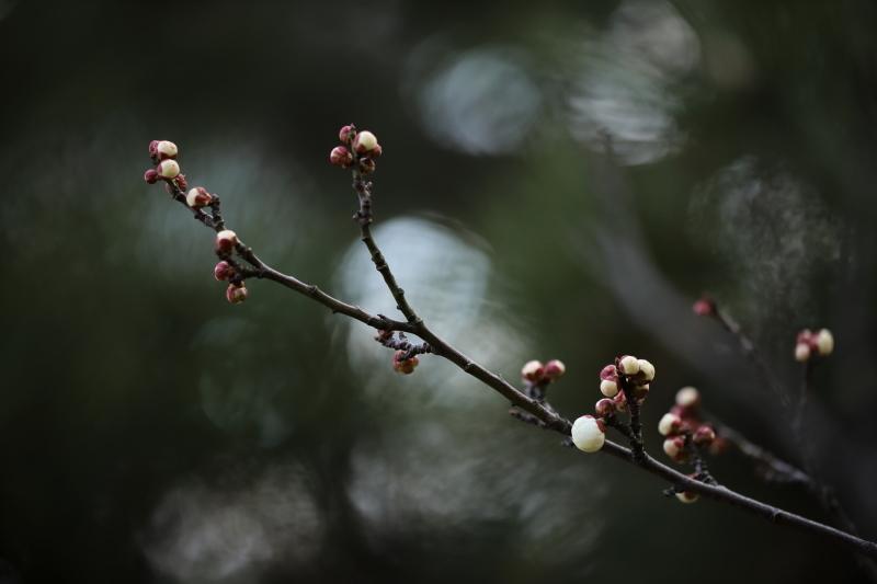 小枝に咲く_e0169421_21073845.jpg