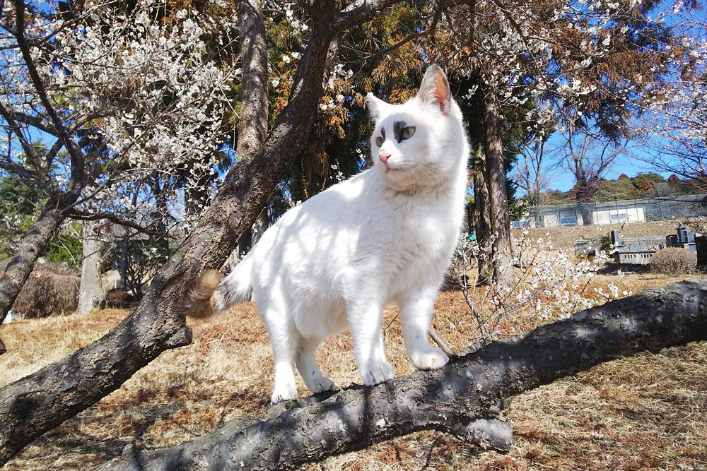 2019.3.9 観梅会☆梅猫モデルは、くぅちゃん♪_f0250322_203515.jpg