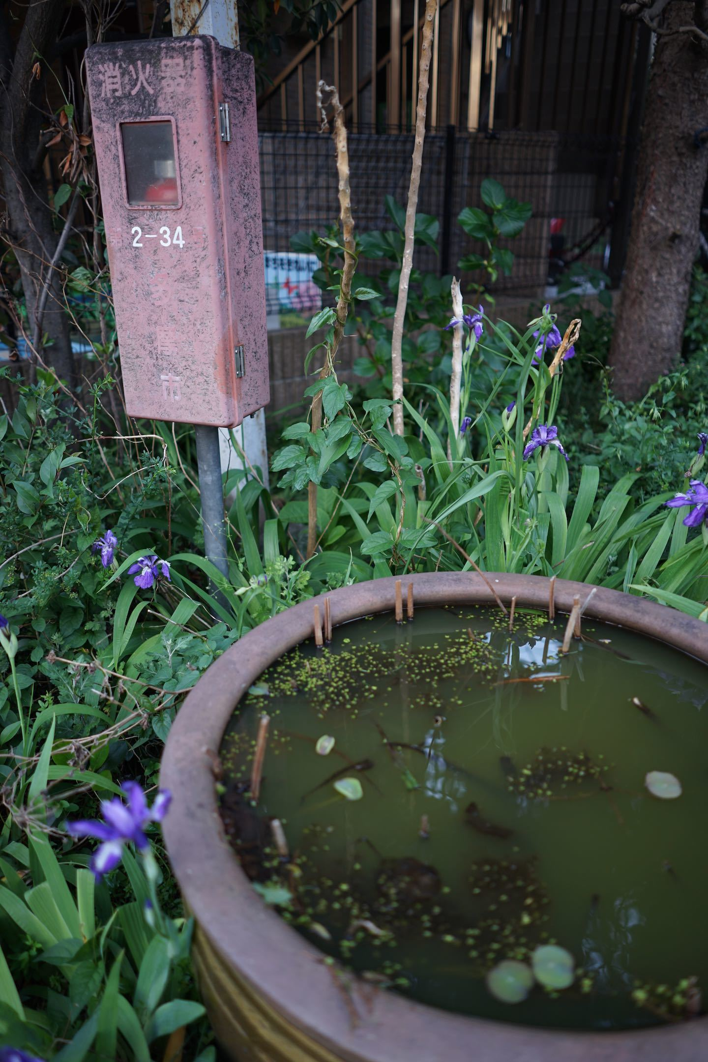 聖蹟桜ケ丘スナップ その69_b0360240_23261473.jpg