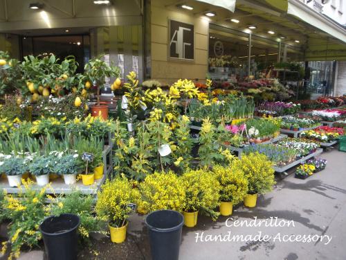 春を告げる花『ミモザ』_d0265249_14414480.jpg