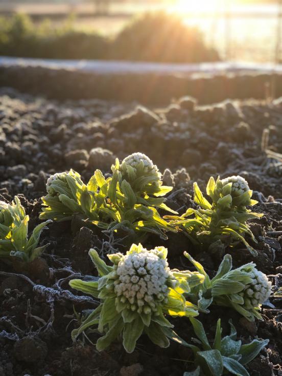 小さい春、み~つけた!_e0107171_07561685.jpg