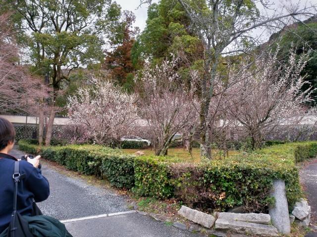 2019早春の京都と大津をめぐる (4) 京都東山の山頂、将軍塚に登る。_f0100593_20364586.jpg