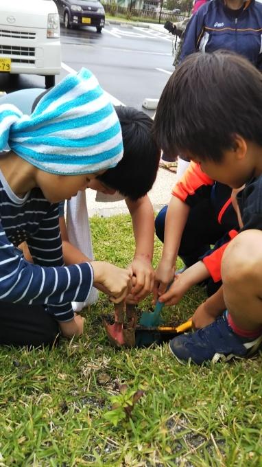 第8回くんじゃん山学校 どんぐりを植えよう!_f0121321_16165759.jpg