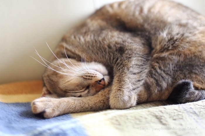 猫がいる暮らし - 20 -_e0347431_20302799.jpg