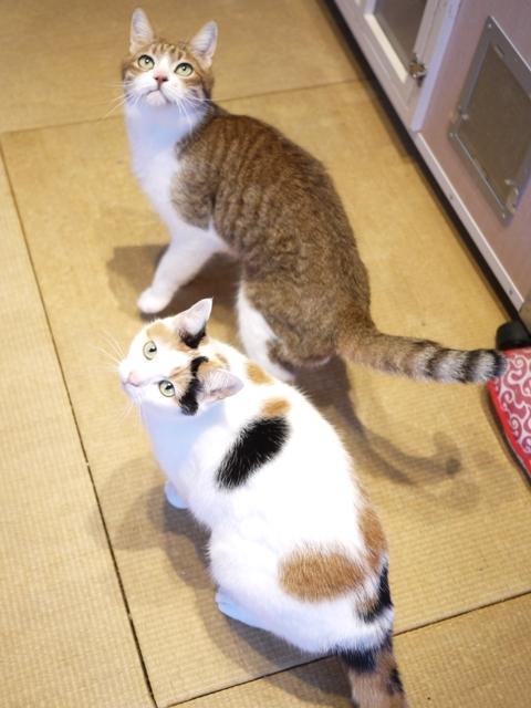猫のお留守番 ウィンクくんエンジェルちゃん編。_a0143140_22480690.jpg