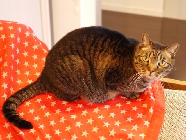 猫のお留守番 ララちゃん編。_a0143140_22525028.jpg