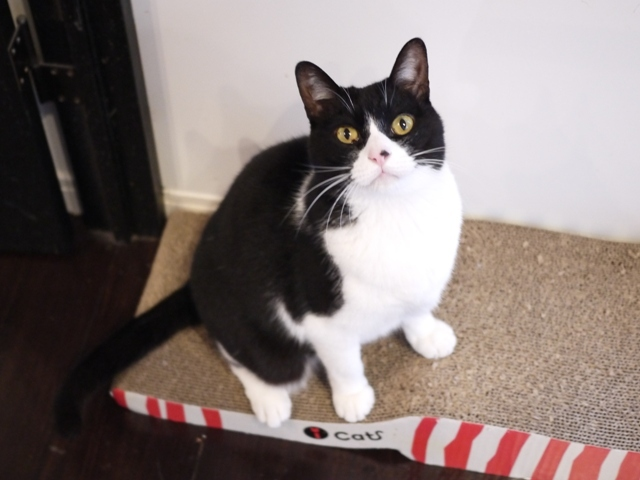 猫のお留守番 ピケちゃん編。_a0143140_22560057.jpg