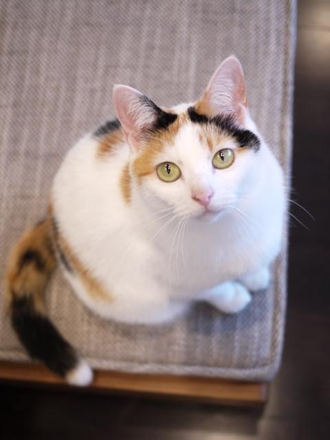 猫のお留守番 エンジェルちゃん編。_a0143140_22595159.jpg