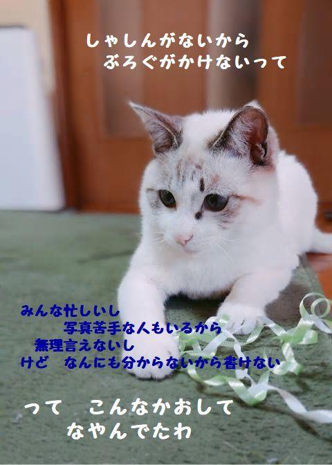 d0393041_22444059.jpg