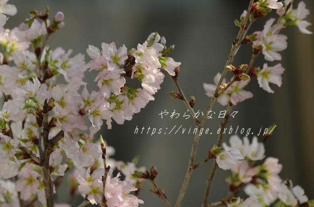 夢の中_a0158478_10490031.jpg