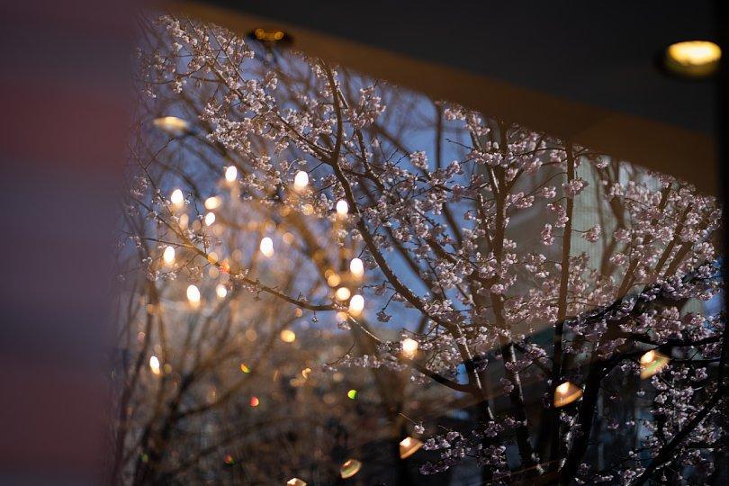 桜で彩られたダウンタウン_d0353489_00225800.jpg