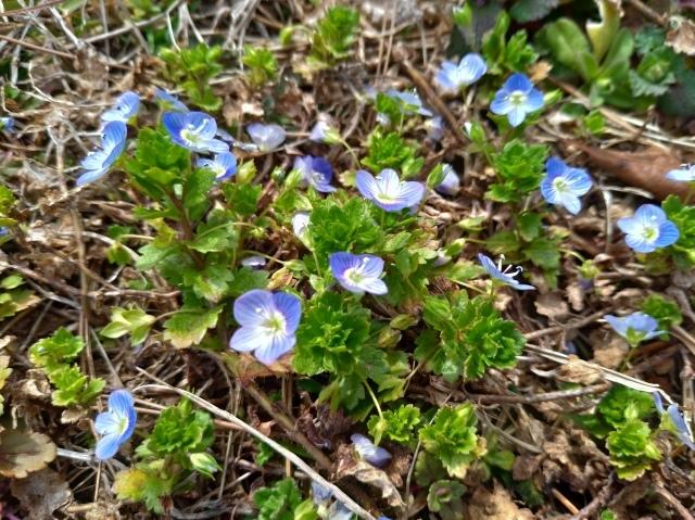 青葉の森3月観察会_f0100593_17031392.jpg