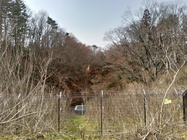 青葉の森3月観察会_f0100593_17034594.jpg