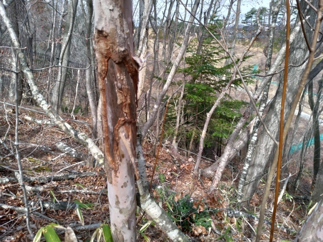 青葉の森3月観察会_f0100593_17042633.jpg