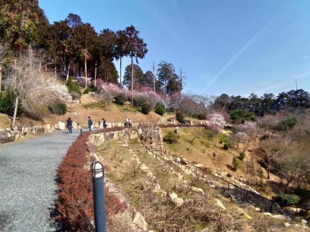 2019早春の京都と大津をめぐる (6) 石山寺に行き、山科で散歩する_f0100593_19130403.jpg