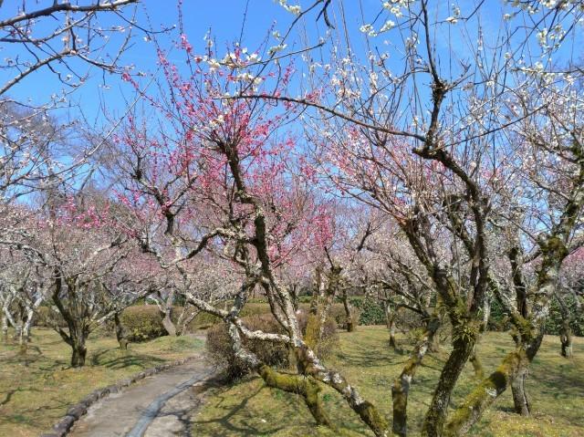2019早春の京都と大津をめぐる (6) 石山寺に行き、山科で散歩する_f0100593_19143480.jpg
