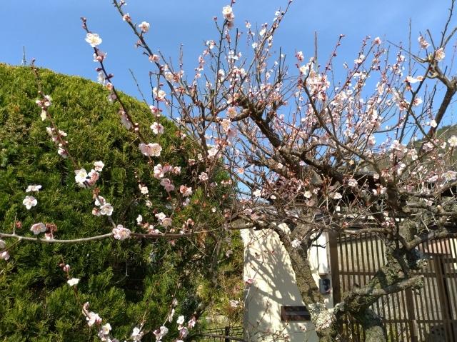 2019早春の京都と大津をめぐる (6) 石山寺に行き、山科で散歩する_f0100593_19150214.jpg