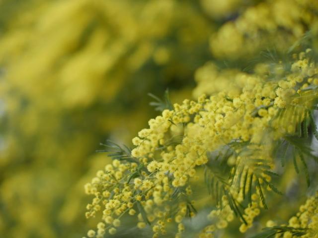 黄金の花_f0147895_18413837.jpg