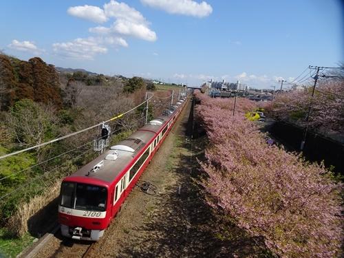 三浦海岸へお花見と、ウォーキング_c0051105_20561522.jpg