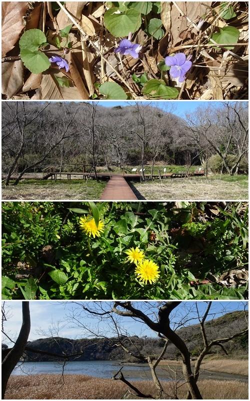 三浦海岸へお花見と、ウォーキング_c0051105_21590964.jpg