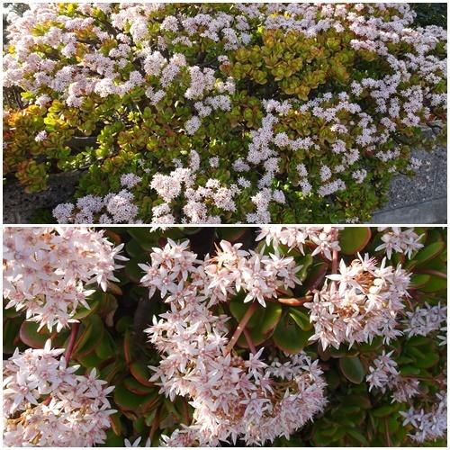 三浦海岸へお花見と、ウォーキング_c0051105_22451581.jpg